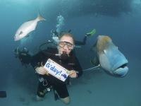 Australien: Lippfisch am Great Barrier Reef