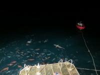 Australien: Nachts am Great Barrier Reef