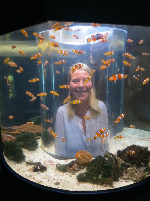Townsville: Great Barrier Reef Aquarium
