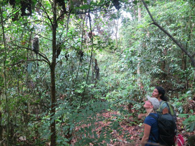 Bukit Lawang: Trekkingtour