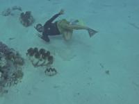 Cookinseln: Riesenmuscheln vor One Foot Islands in der Lagune von Aitutaki