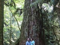 Vancouver Island: MacMillan Provincial Park