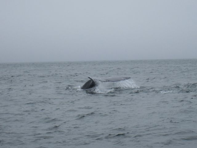 Vancouver Island: Whale Watching