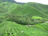 Teeplantagen Cameron Highlands