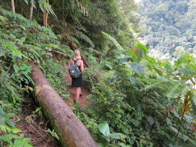 Dschungel Wanderung
