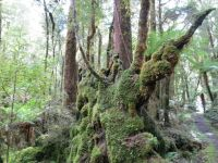 Neuseeland - Paparoa Nationalpark