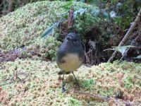 Neuseeland - Im Paparoa Nationalpark