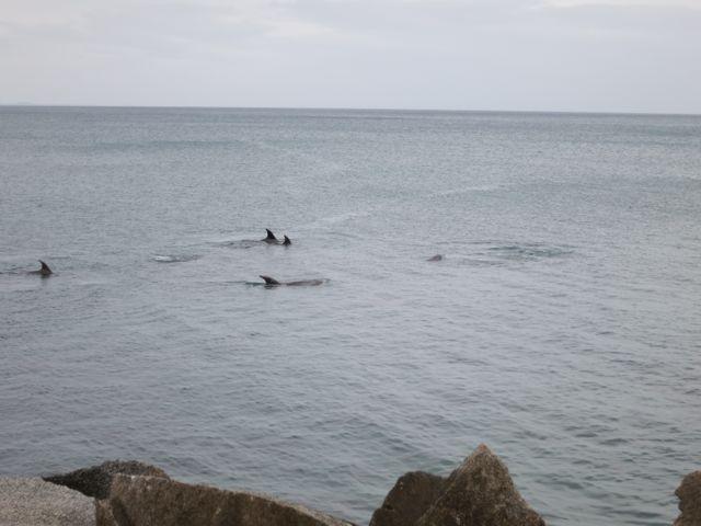 Coromandel Peninsula: Delfine