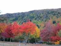 Neuseeland: Herbst in Arrowtown
