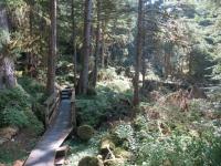 USA: Boardwalk zum Anan Bear Observatory, Alaska