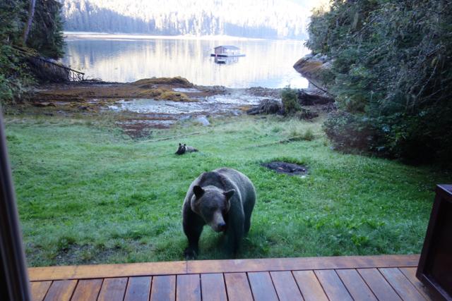 USA: Grizzlys vor der Anan Bay Cabin, Alaska
