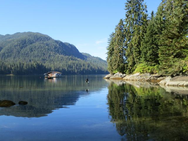 USA: Weisskopfseeadler vor der Anan Bay Cabin, Alaska
