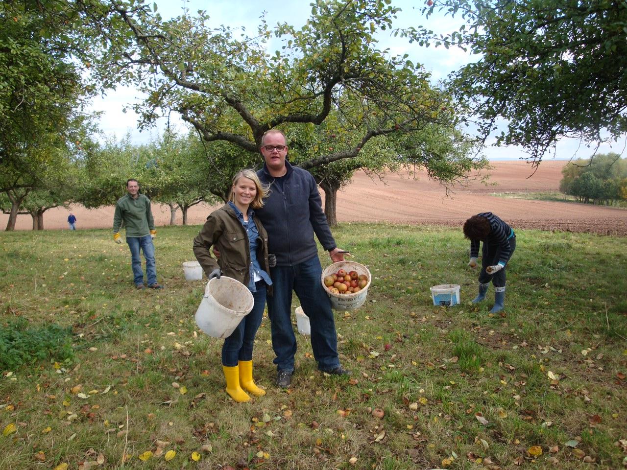 Apfelernte Steinrode