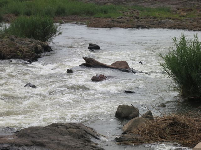Krüger Nationalpark: Suchbild