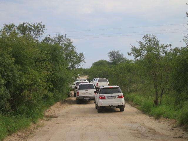 Krüger Nationalpark: Stau